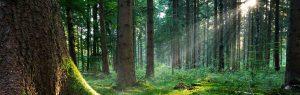 foresta-firenze