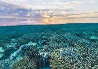 la-grande-barriera-corallina